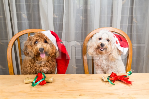Concept of excited dogs on Santa hat with Christmas gift on table. Stock Photo
