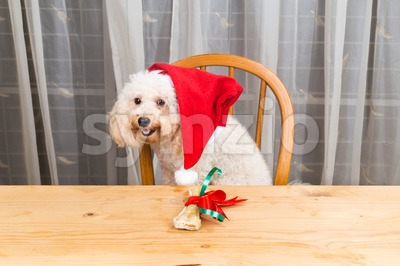 Concept of excited dog on Santa hat with Christmas present on table. Stock Photo