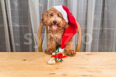 Concept of excited dog on Santa hat with Christmas gift  on table. Stock Photo