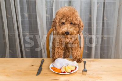 Concept of excited dog having delicious raw meat meal on table. Stock Photo