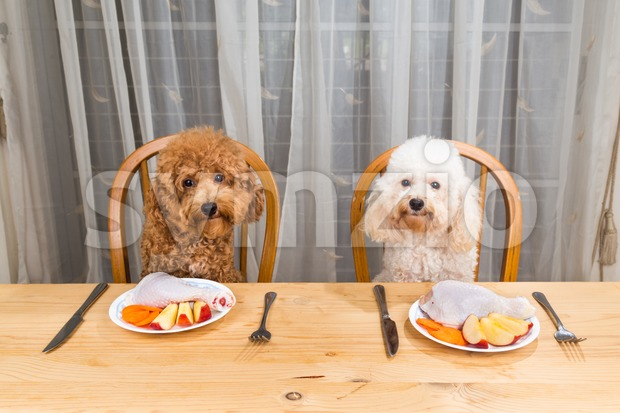 Concept of excited dogs having delicious raw meat meal on table. Stock Photo