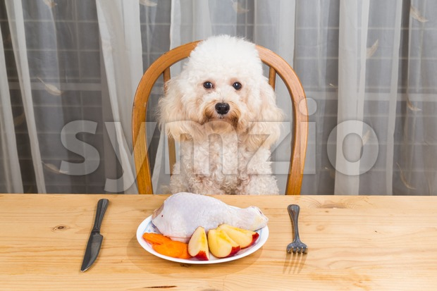 Concept of dog having delicious raw meat meal on table. Stock Photo
