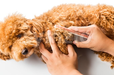 Close up of dog fur combing and de-tangling during grooming Stock Photo