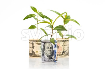 Concept of green plant grow on US Dollar currency note Stock Photo