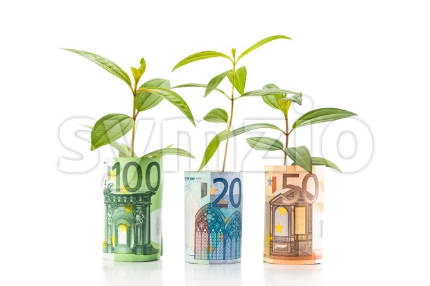 Concept of green plant grow on EURO currency note.