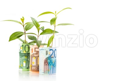 Concept of green plant grow on EURO currency note Stock Photo