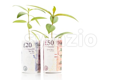 Concept of green plant grow on British Pound currency note Stock Photo