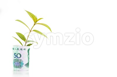 Concept of green plant grow on China Renminbi currency note Stock Photo