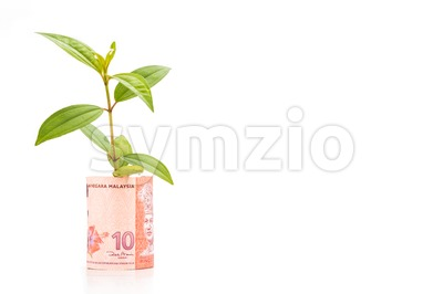 Concept of green plant grow on Malaysia Ringgit currency note Stock Photo