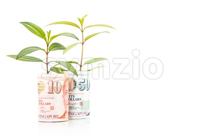 Concept of green plant grow on Singapore Dollar currency note Stock Photo
