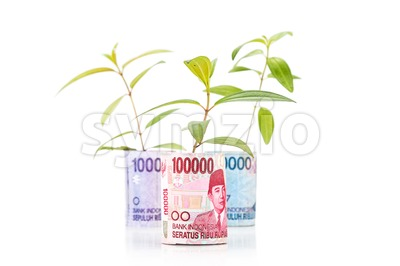 Concept of green plant grow on Indonesia Rupiah currency note Stock Photo