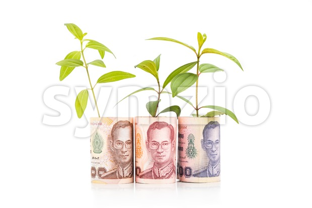 Concept of green plant grow on Thailand Baht currency note.
