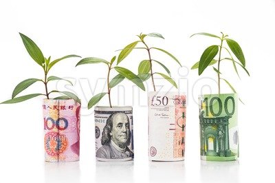Concept of green plant grow on major currency note Stock Photo