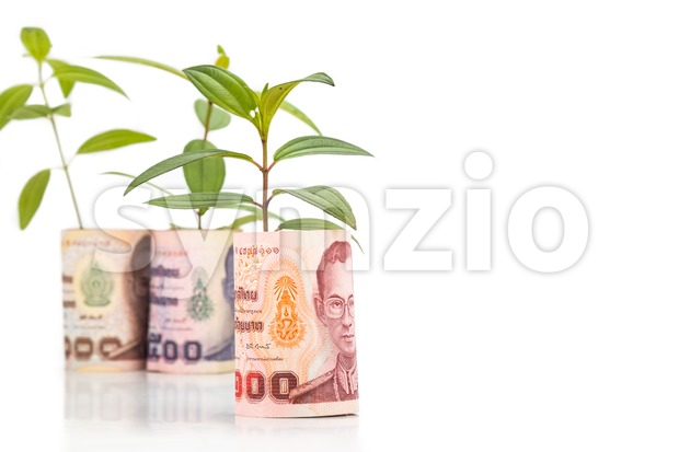 Concept of green plant grow on Thailand Baht currency note Stock Photo