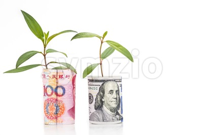 Concept of green plant grow on USD against China Renminbi currency Stock Photo