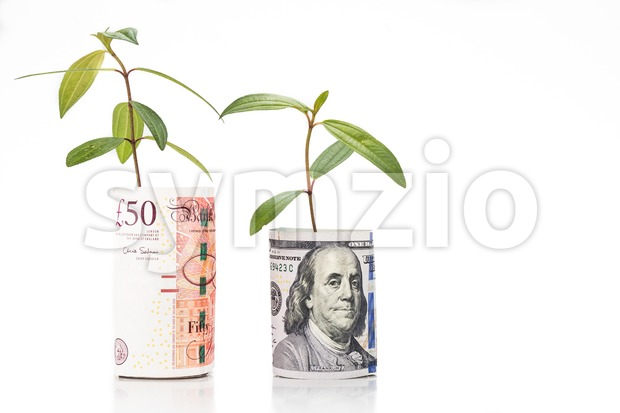 Concept of green plant grow on USD against British Pound currency Stock Photo