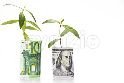 Concept of green plant grow on USD against EURO currency Stock Photo