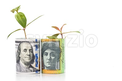 Concept of green plant grow on USD against Australian Dollar currency Stock Photo