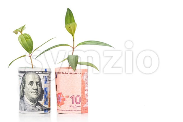 Concept of green plant grow on USD against Malaysia Ringgit currency Stock Photo