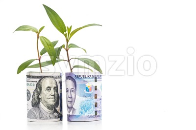 Concept of green plant grow on USD against Philippines Piso currency Stock Photo
