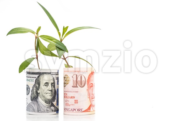Concept of green plant grow on USD against Singapore Dollar currency.