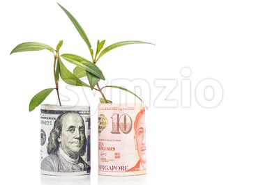 Concept of green plant grow on USD against Singapore Dollar currency Stock Photo
