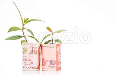 Concept of green plant grow on Malaysia Ringgit against Singapore Dollar currency Stock Photo