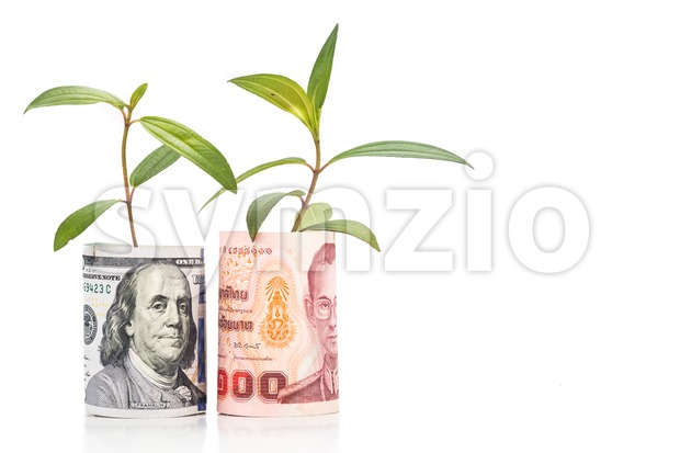 Concept of green plant grow on USD against Thailand Baht currency Stock Photo