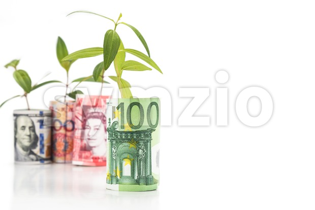 Concept of green plant grow on currency with EURO in foreground Stock Photo