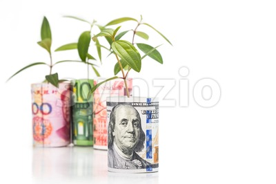 Concept of green plant grow on currency with US Dollar in foreground Stock Photo