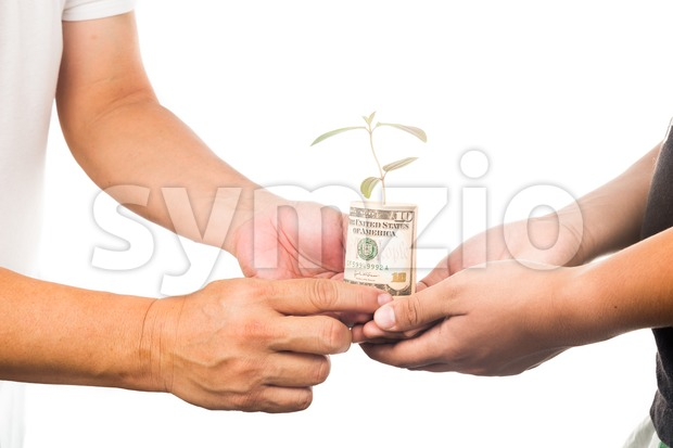 Concept of presenting plant growing from USD currency, symbolizing growing financial wealth Stock Photo