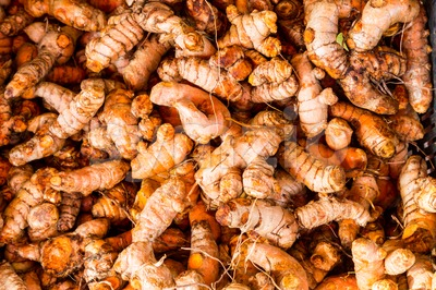 Heaps of freshly harvested turmeric roots Stock Photo