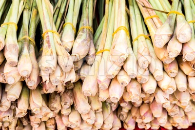 Stack of freshly harvested lemongrass root stalks Stock Photo