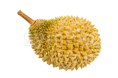 Freshly harvested durian fruit of the Musang King species in Malaysia Stock Photo