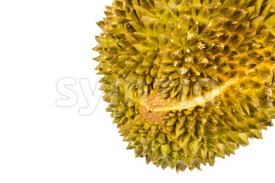Close up on durian fruit with a naturally occurring split when the fruit is ripe Stock Photo