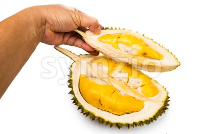 Hand holding a portion of durian husk with its ripe and soft delicious flesh Stock Photo