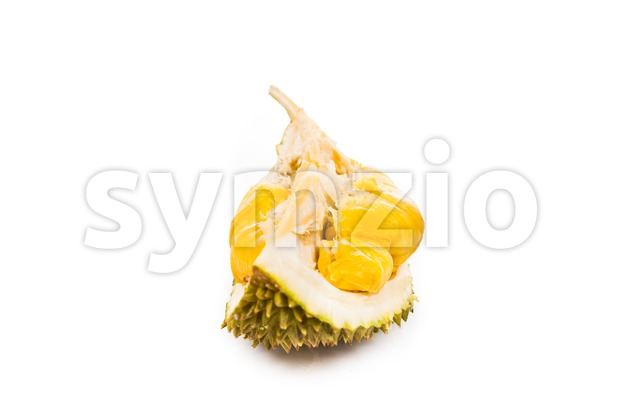 Freshly harvested durian fruit with delicious golden yellow soft flesh Stock Photo