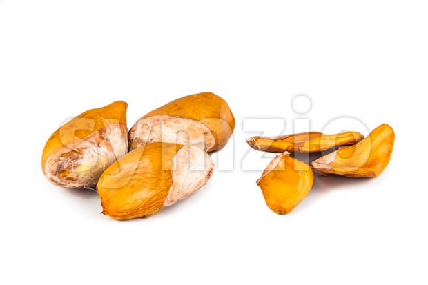 Comparison between big hard variety against small thin soft seeds variety of durian fruit Stock Photo